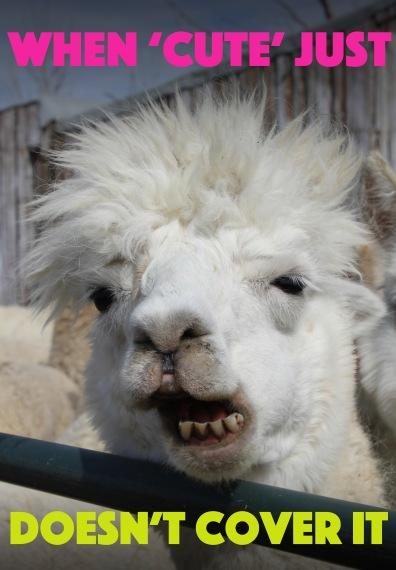 alpaca title