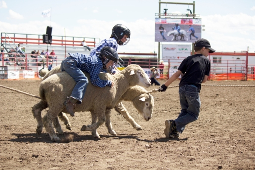 little britches Wild ram race 2nd and 3rd