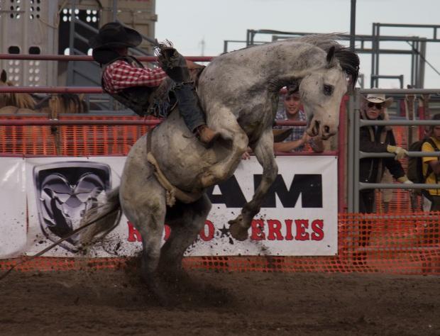 Rodeo 33 Logan Hodson