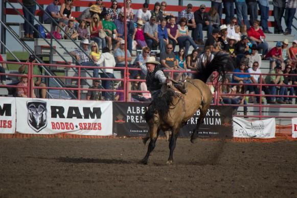 Rodeo- Wild Bronc 1