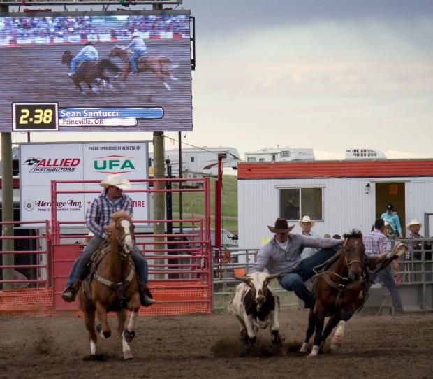 Rodeo- Wild Bronc 14
