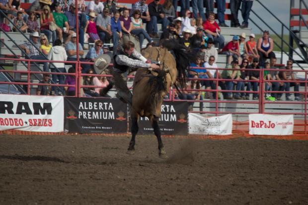 Rodeo- Wild Bronc 2