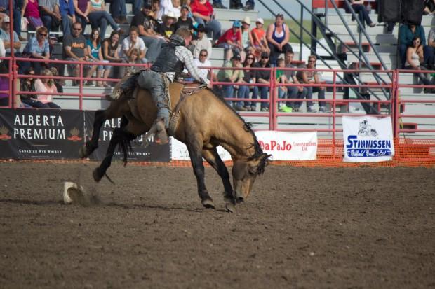 Rodeo- Wild Bronc 3