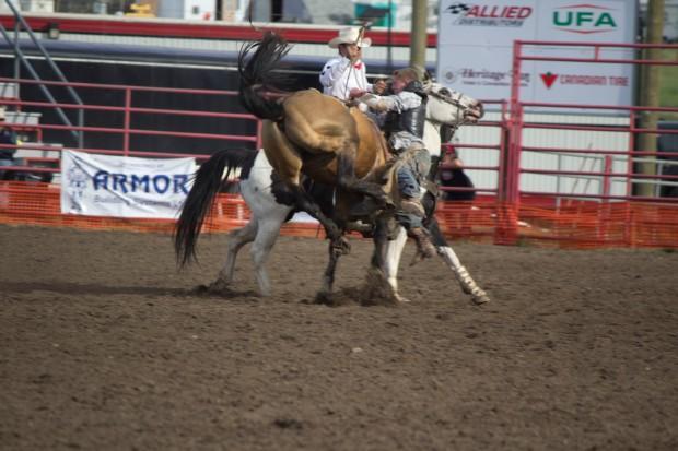 Rodeo- Wild Bronc 4