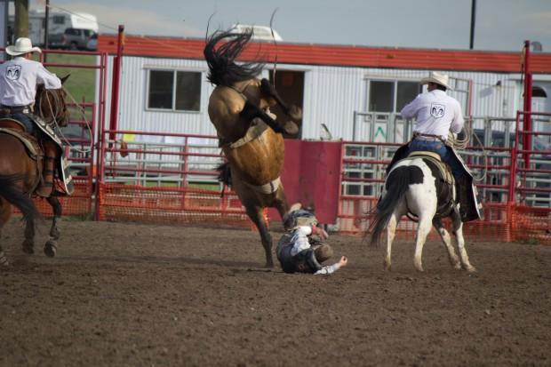 Rodeo- Wild Bronc 5