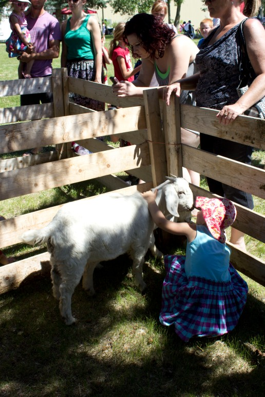 Canada day petting zoo 3