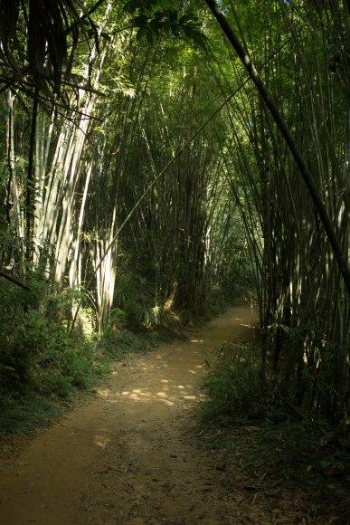 Khao Sok Hike 12