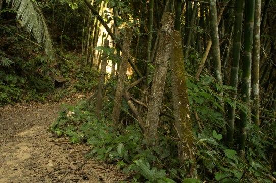 Khao Sok Hike 21