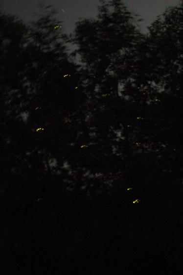 Fireflies-10
