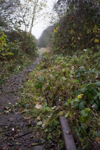 English Rain Walk-13