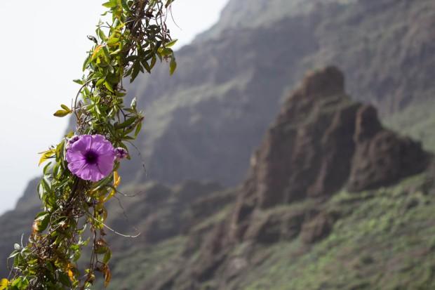 Tenerife 2014 Xmas-33