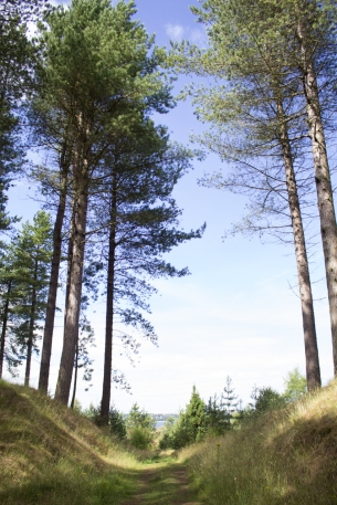 Tentsmuir Forest Bk-10