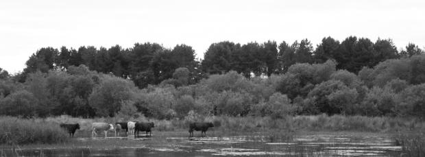 Tentsmuir Forest Bk-23