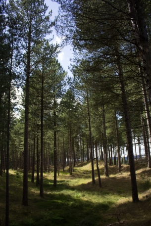 Tentsmuir Forest Bk-9